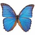 N Butterfly 036 80x70