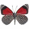 N Butterfly 037 90x70
