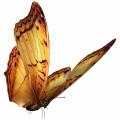 N Butterfly Fly 039 100x100