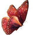N Butterfly Fly 040 100x100