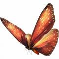 N Butterfly Fly 042 100x100