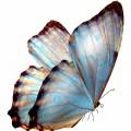 N Butterfly Fly 045 100x100