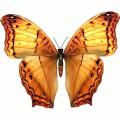 N Butterfly Fly 047 100x100