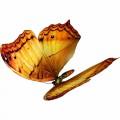 N Butterfly Fly 048 100x100