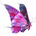 N Butterfly Fly 050 100x100