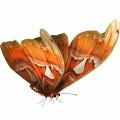 N Butterfly Fly 051 100x100