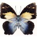N Batterfly 001 75x75