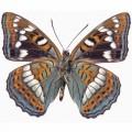 N Batterfly 002 90x70