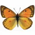 N Batterfly 005 90x70