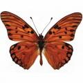 N Batterfly 009 90x70