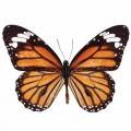 N Batterfly 010 90x70