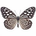 N Batterfly 011 90x70