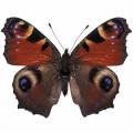 N Batterfly 014 90x70