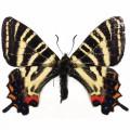 N Batterfly 015 90x70