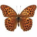 N Batterfly 016 95x70
