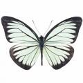 N Batterfly 020 90x70