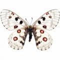 N Batterfly 021 90x70