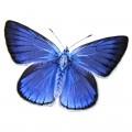 N Batterfly 034 100x70