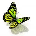 N Batterfly 036 120x120