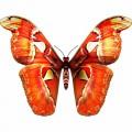 N Butterfl Fly 046 100x100