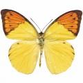 N Butterfly 022 80x70