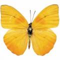 N Butterfly 023 80x70