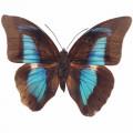 N Butterfly 027 90x70