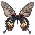 N Butterfly 035 70x70