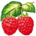 N Fruit20 200 200