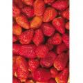 N Fruit01 250x350