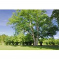 N Nature 240 360x250 B