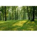 N Nature 290 380x260 B