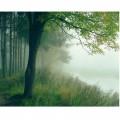 N Nature 136 251x200 B