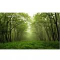 N Nature 144 325x200 B