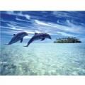 N Dolphin 0112 170x130 B